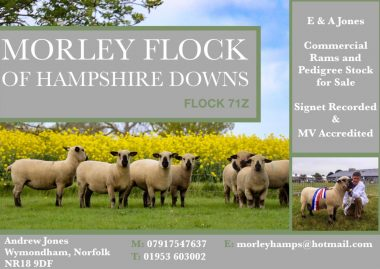Morley Flock Advert -page-001