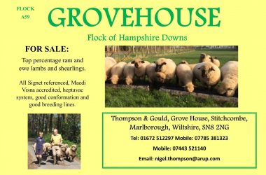 Grove house ad