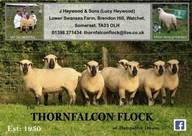thornfalcon